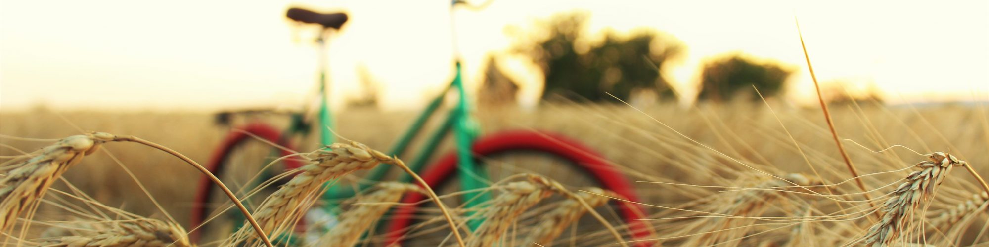 agriculture-barley-bicycle-1595440